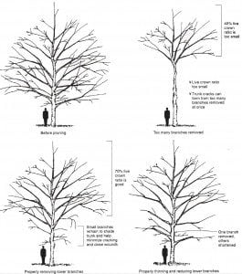 Ways to prune a tree