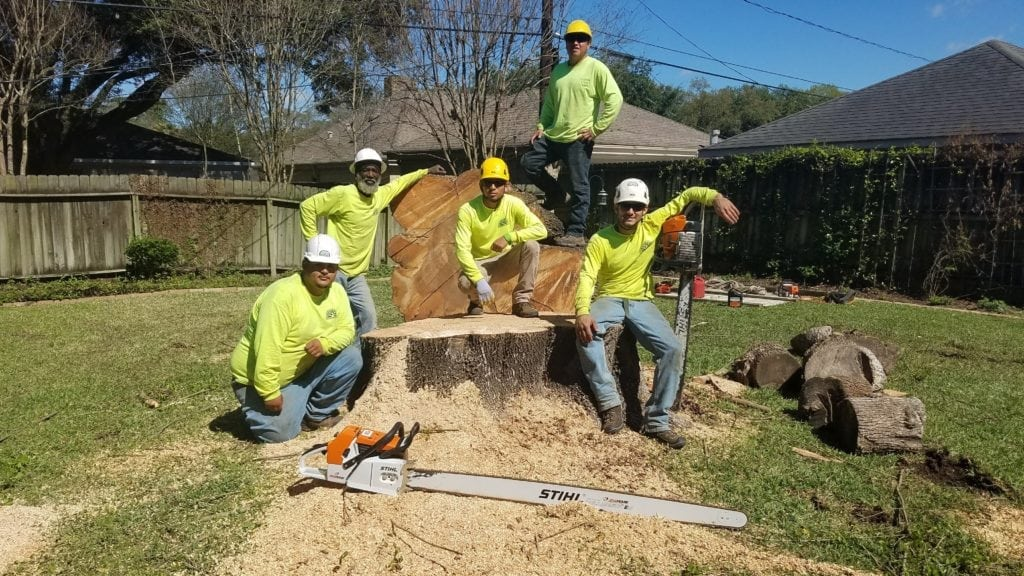 Tree Removal Service Team in Houston