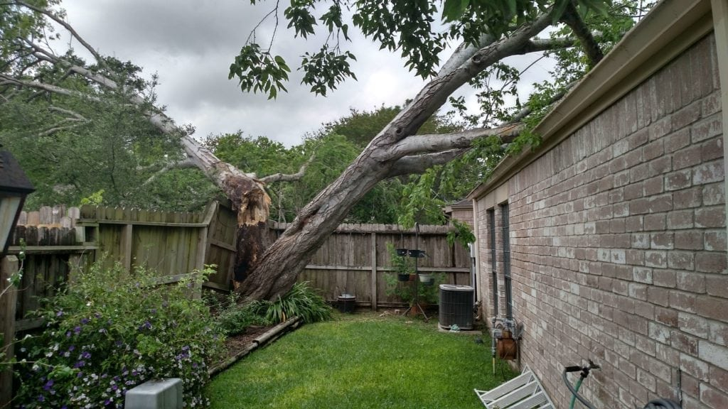 Tree on house. Tree risk evaluation. How to tell if my trees are safe