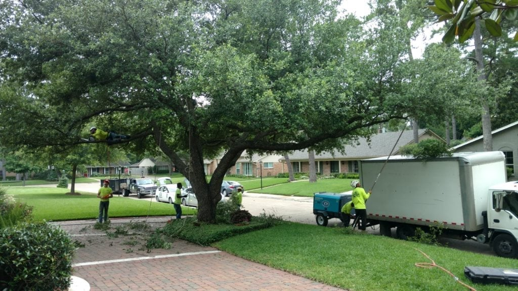 Tree Pruning and Tree Trimming by Certified Arborist Tree Service