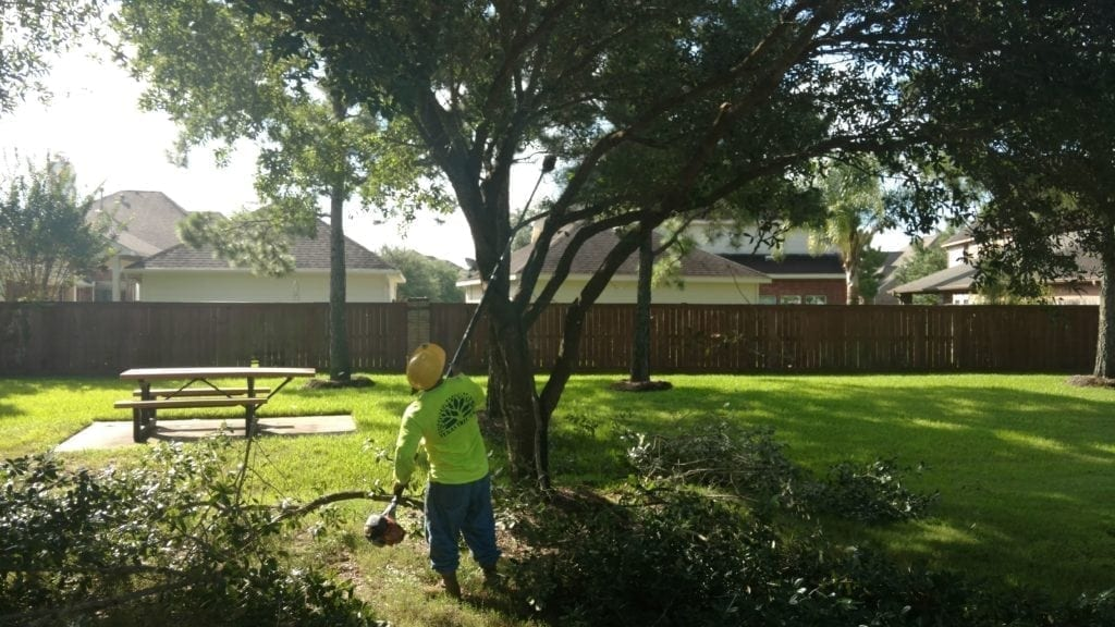 When is the best time to prune trees in Houston?