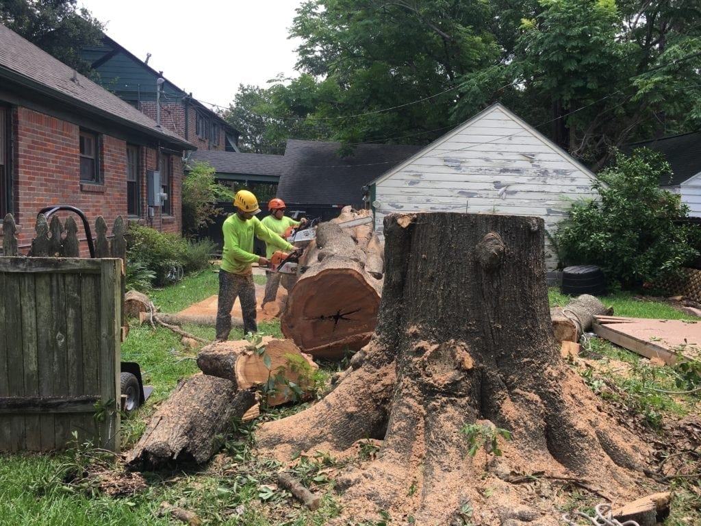 Tree removal cost in houston