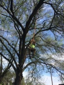 climbing aids in tree pruning