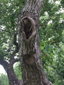 tree pruning wound care