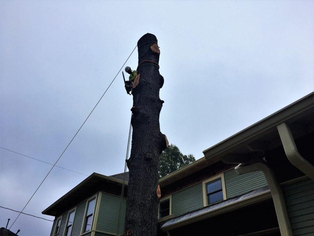 tree removal methods