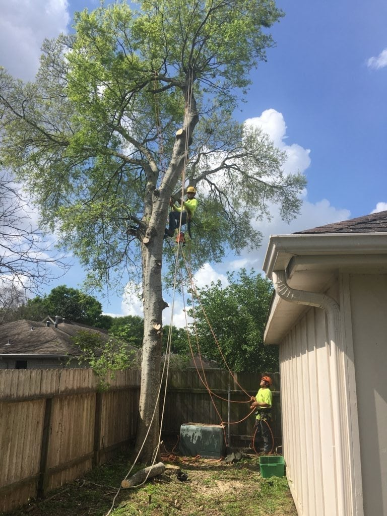 tree removal reasons