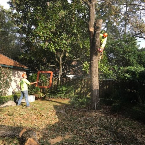 tree removal methods