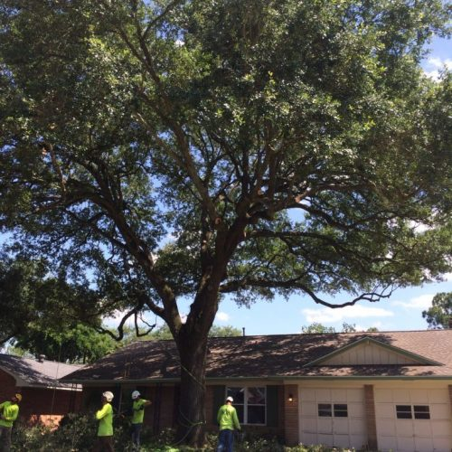 tree trimming to reduce risk